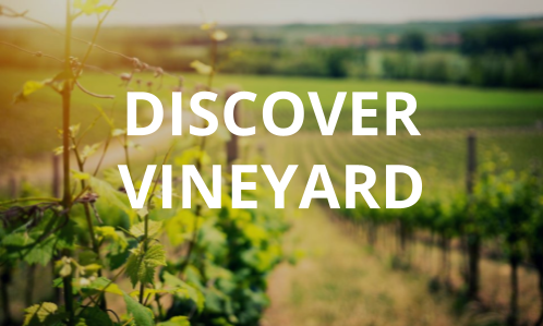 Discover Vineyard